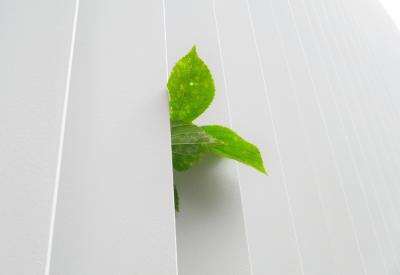Green plant peeking behind white fence